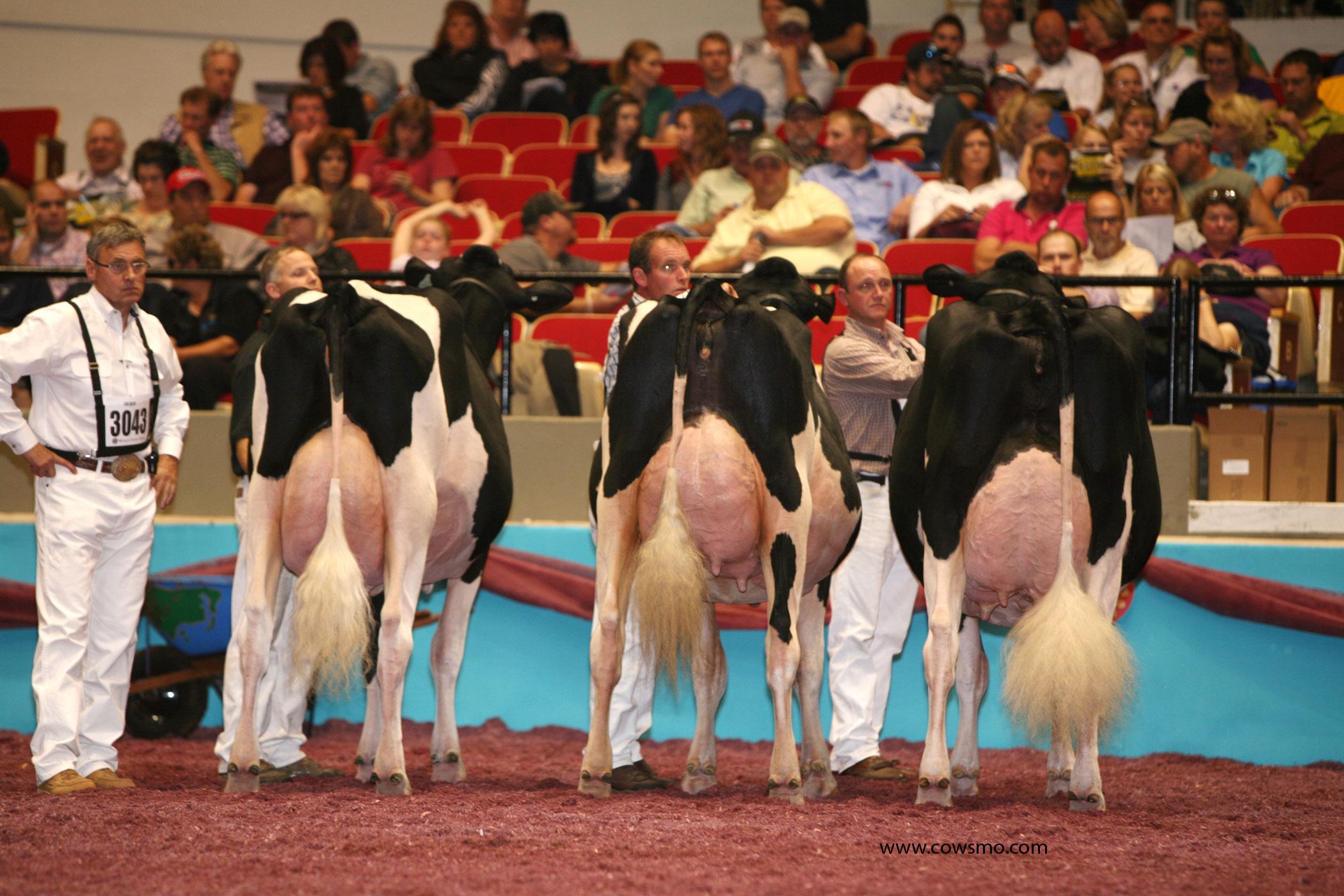 Генетика Молочного Скота в Канаде