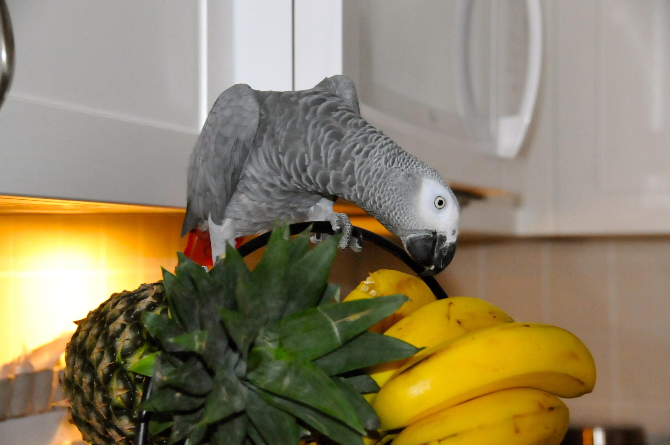 Попугаи  Ванкувера