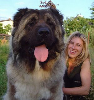 Самая собака защитник