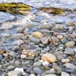 Море Ванкувер